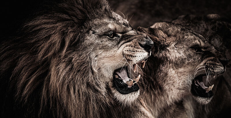 Exude Confidence Of A Lion In Business Life And Conquer Challenges
